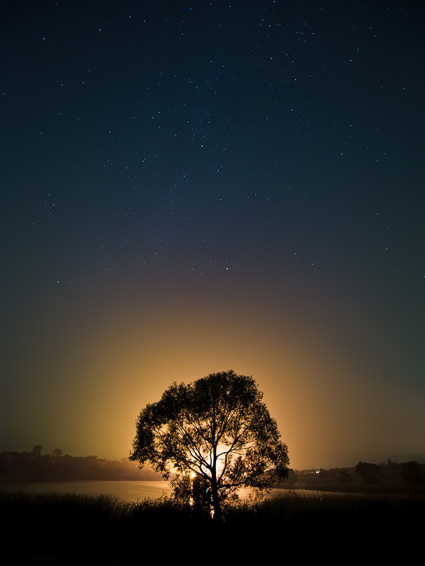 The keeper of night fairytales | tree, sunset, silhouette