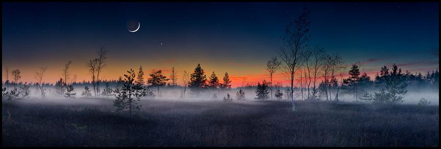 Fairytale   trees, night, panorama, fog