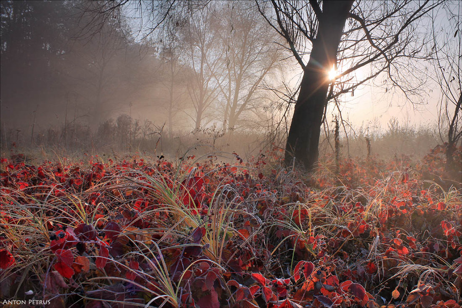 A colourful morning | mist, hoarfrost, sun