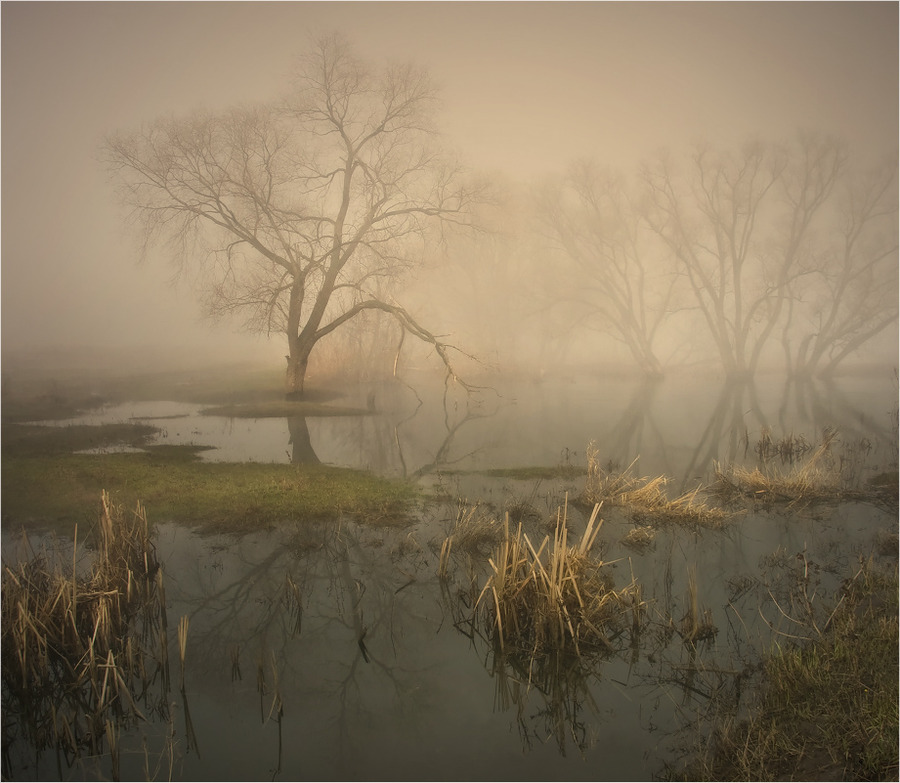 Silence | swamp, trees, fog