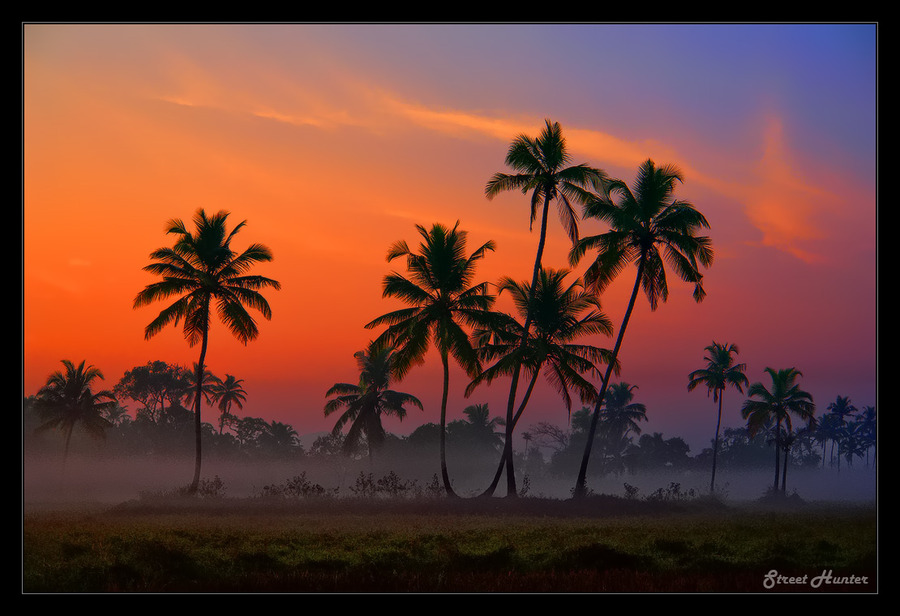 One magic morning at GOA | trees, sunrise, silhouette