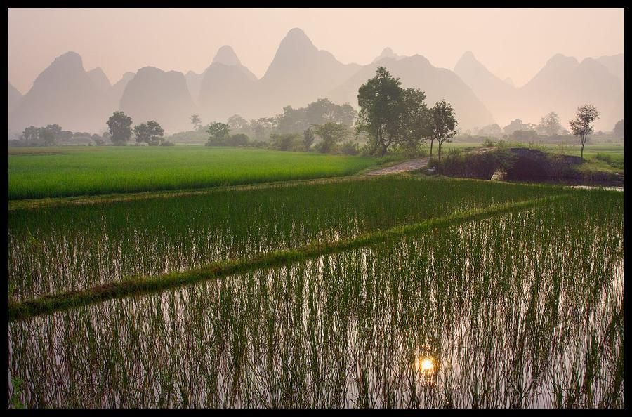 The rice fields of Yangshuo | haze, field