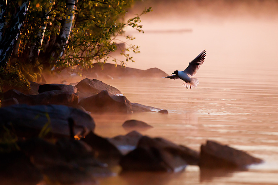 Hello gull | animals, rocks, river