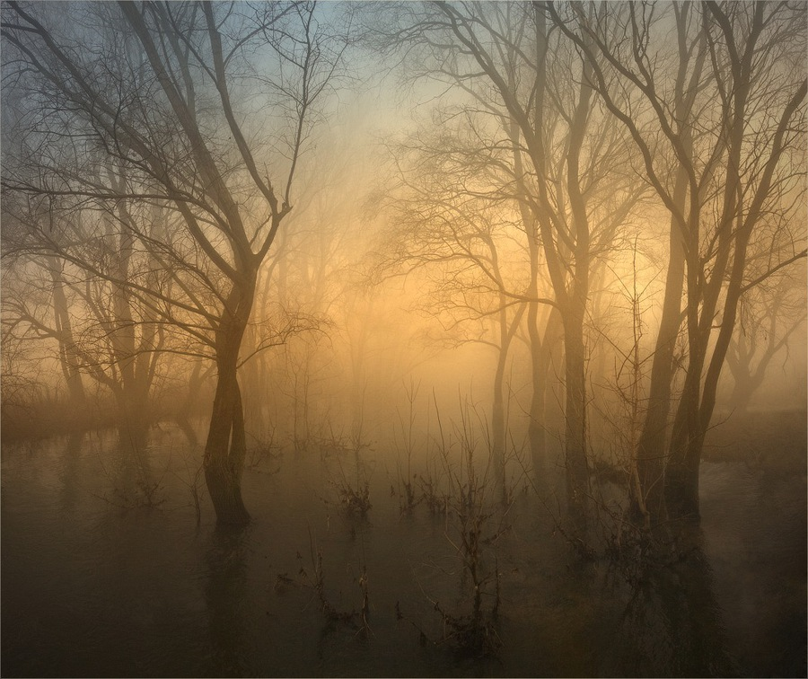 By a magic river | trees, river, silhouette, fog