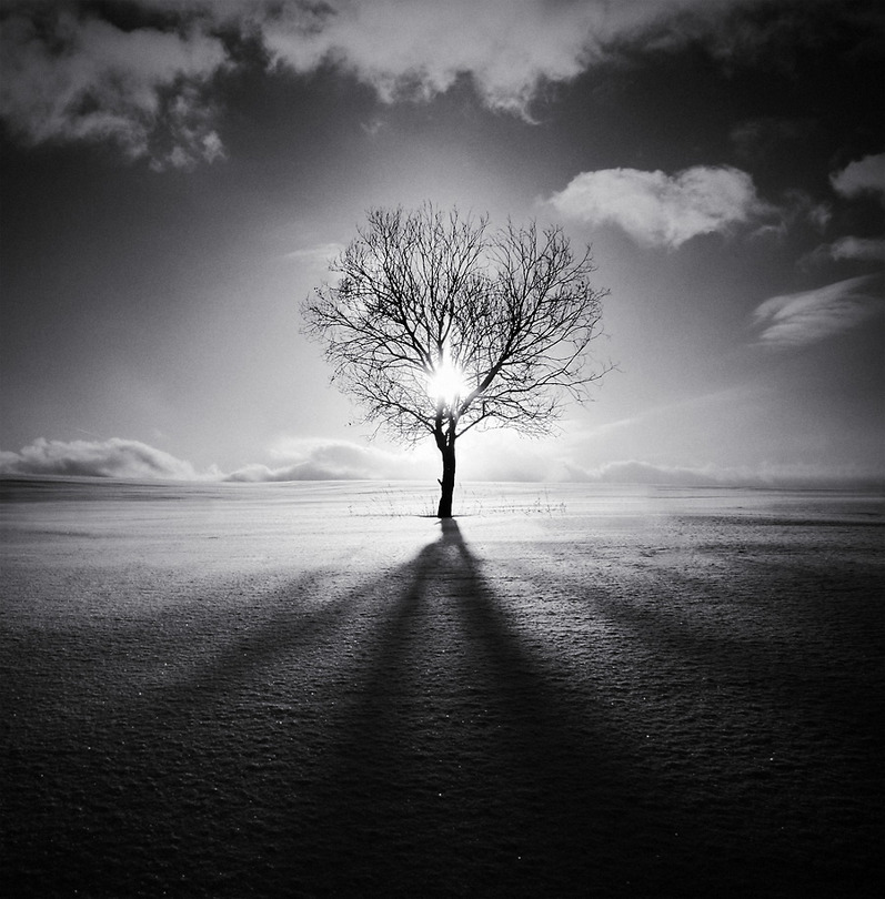 Edge of the world | tree, silhouette, sun, black and white