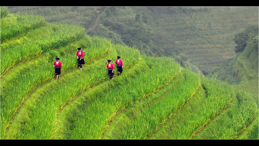 Work in a rice field | mountains, people, field, rice terraces