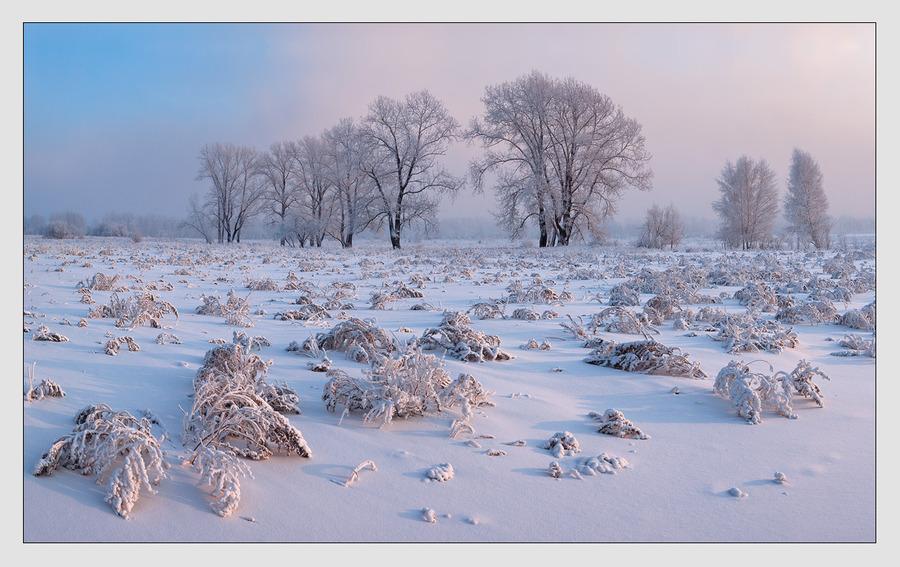Innocent snow   evening, trees, dusk, sunset, winter, hoarfrost, field, snow