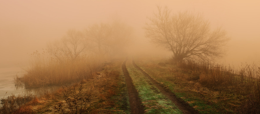Mysterious road | shore, branches, water, trees, road, haze, mist, river, fog
