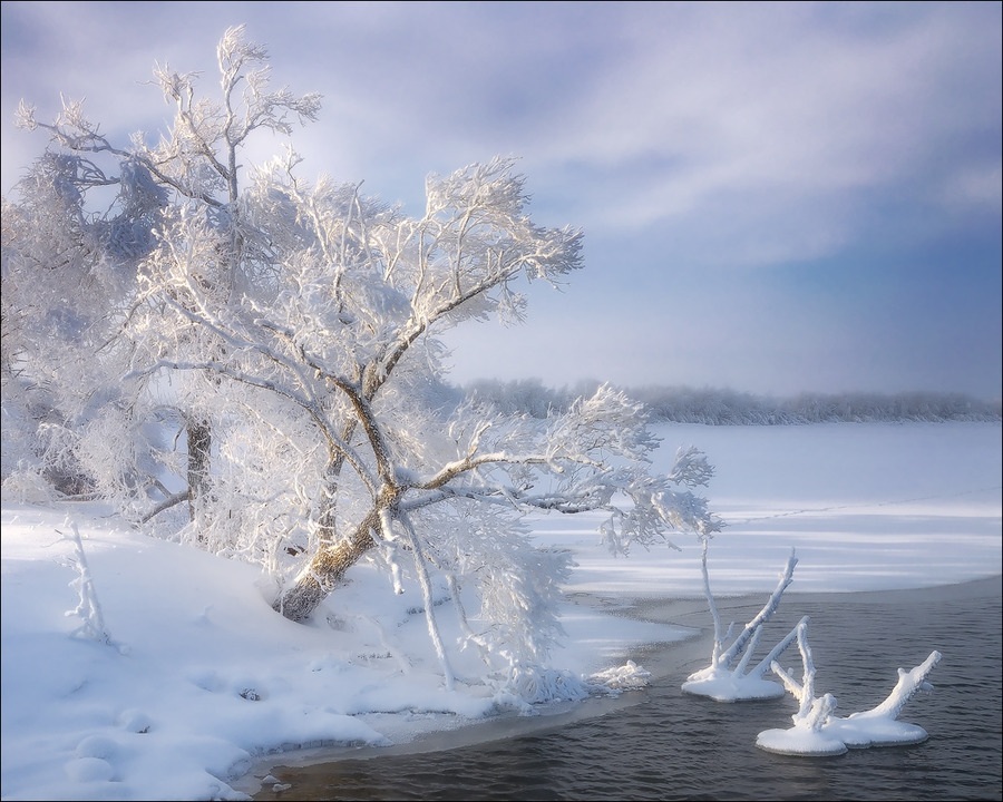 The Winter's Tale  | branches, water, trees, winter, hoarfrost, river, snow