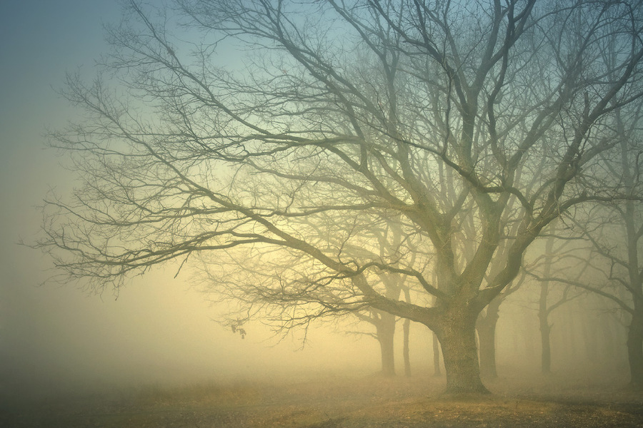 Kingdom of fogs | branches, trees, fog