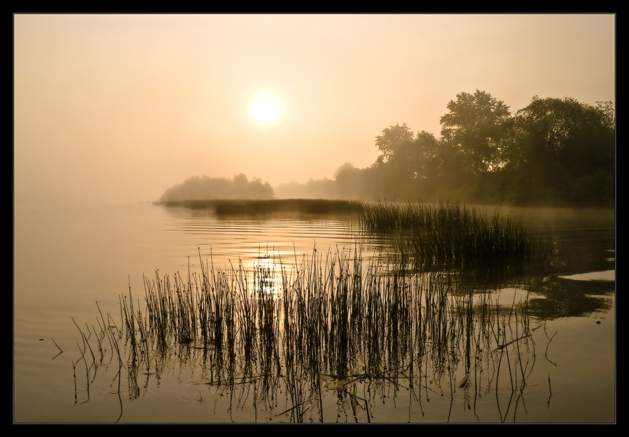 Morning calm | rush, river, sun, fog, morning
