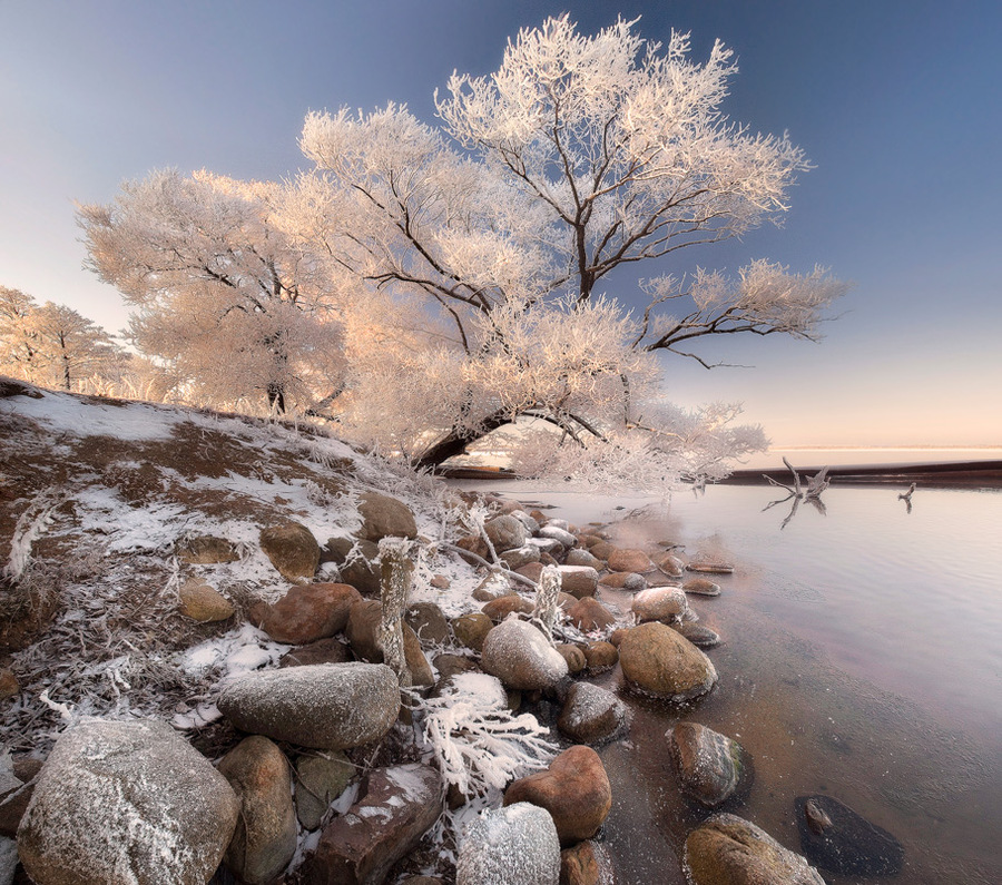 Shatura in winter | shore, water, tree, winter, stones