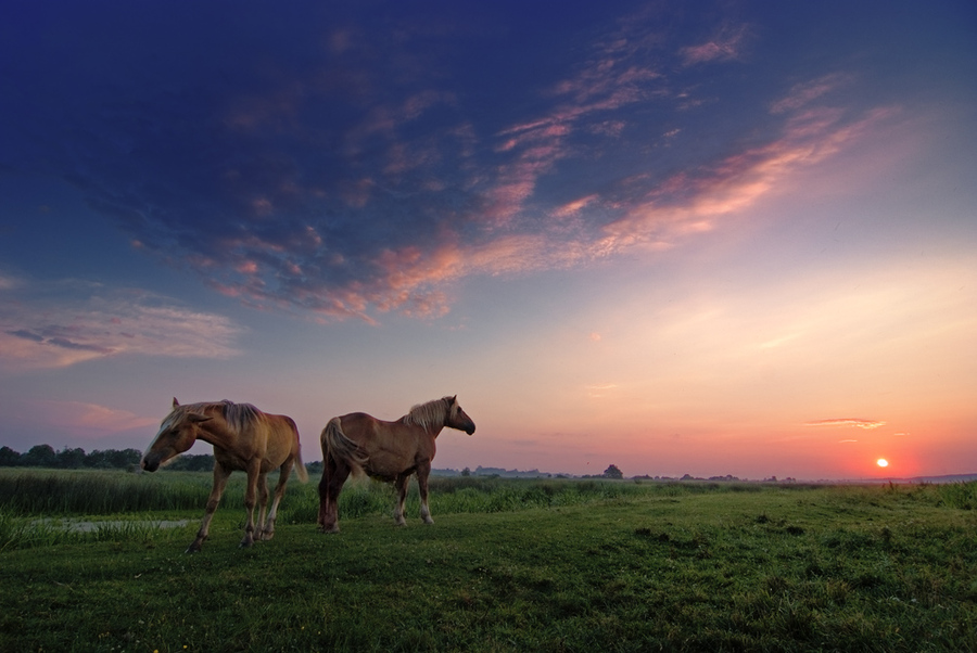 Horses on the meadow | animals, dusk, horses, meadow