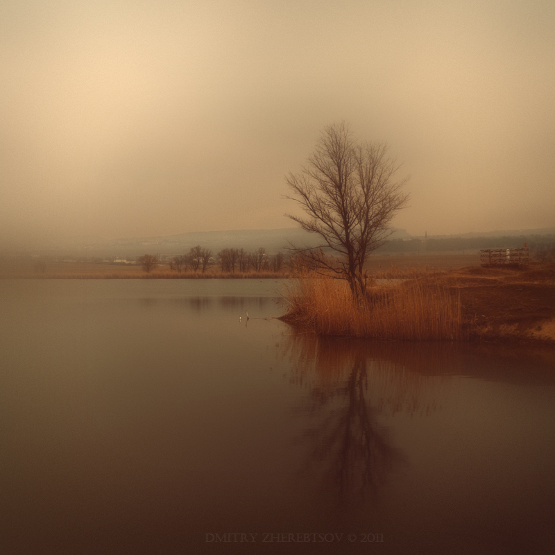 Tree above the river | tree, haze, river