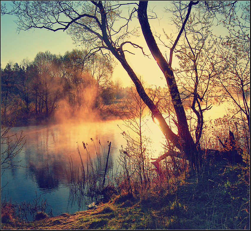 Seeing the sunrise | shore, branches, haze, dawn, river