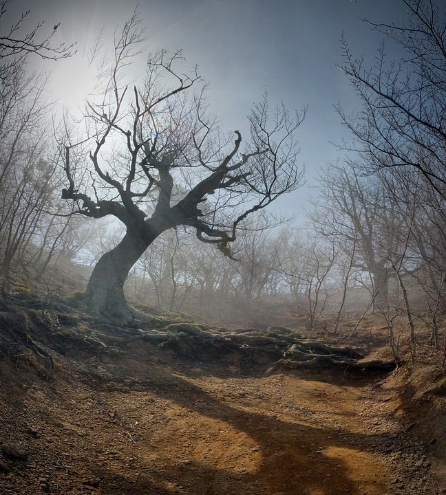 Valley of the ghosts | branches, tree, valley, mist