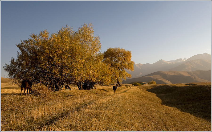 autumn landscape | skyline , mountains, trees, mist, animals