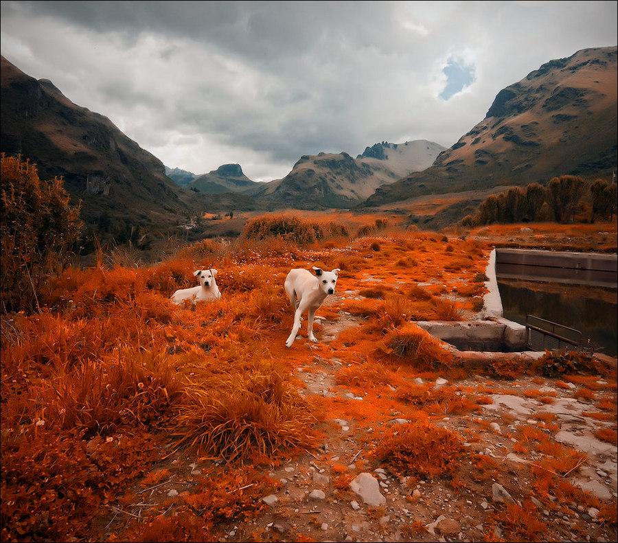 Ecuador mountain | mountains, animals, colourful