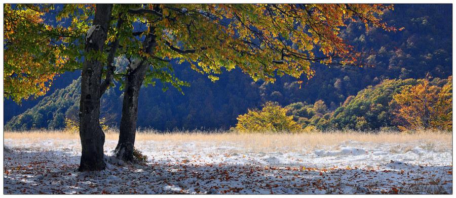 Contradictory landscape | tree, autumn, light