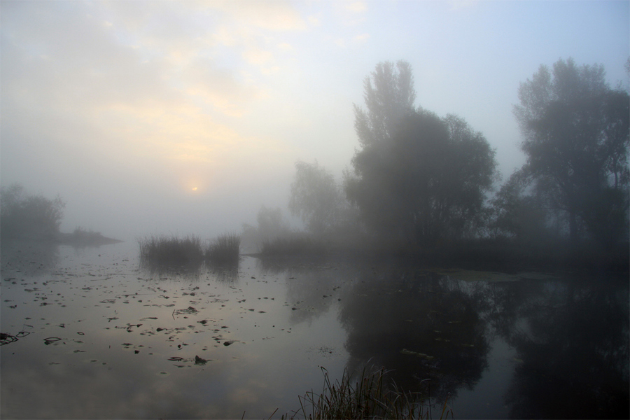Misty morning | water, trees, mist, sunrise, river