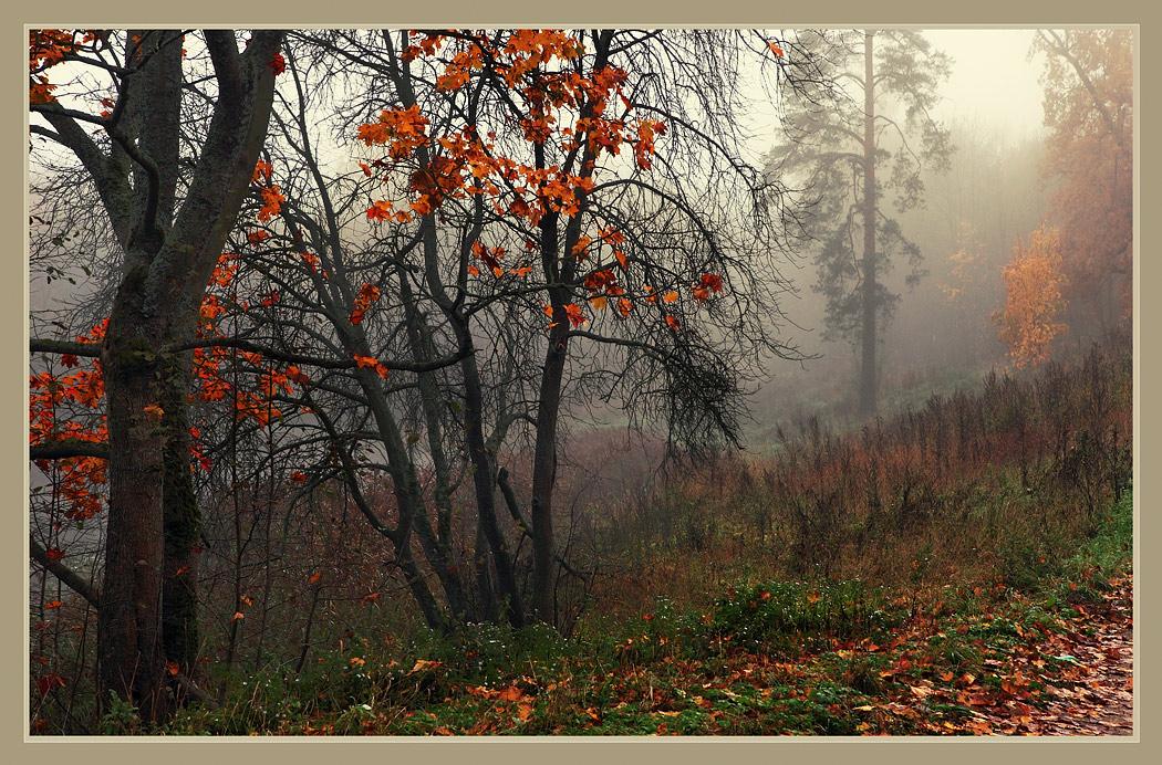 Autumn wood | autumn, wood, mist, grass