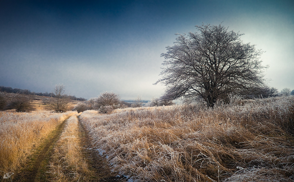 INature in expectation of winter | landscape, nature, trees, sky, field, dry grass, hoarfrost, cold, broad gauge, day