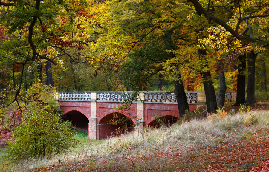 Red bridge | bridge, fallen leafs, autumn, tree