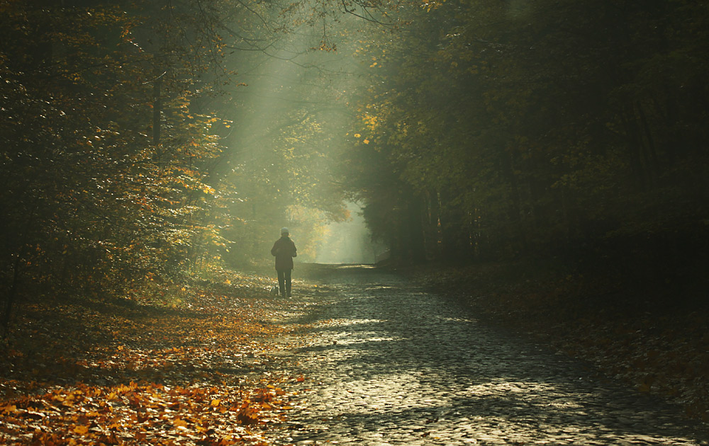 Sunbeams caress a man | sunbeams, man, path, wood