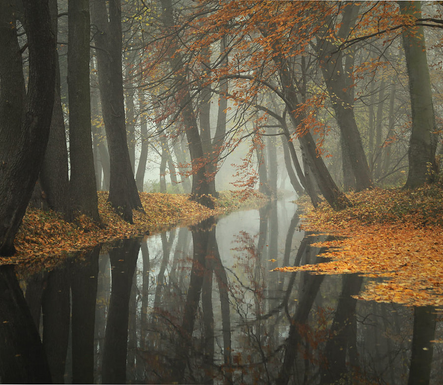 Forest Venice | water, trees, forest, autumn