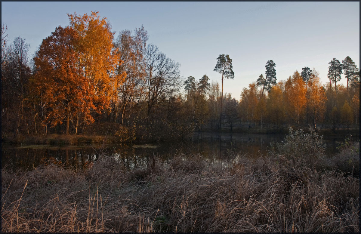 Autumn day  | landscape, autumn , river, trees  , golden, sunshine , pine, forest, dried, grass