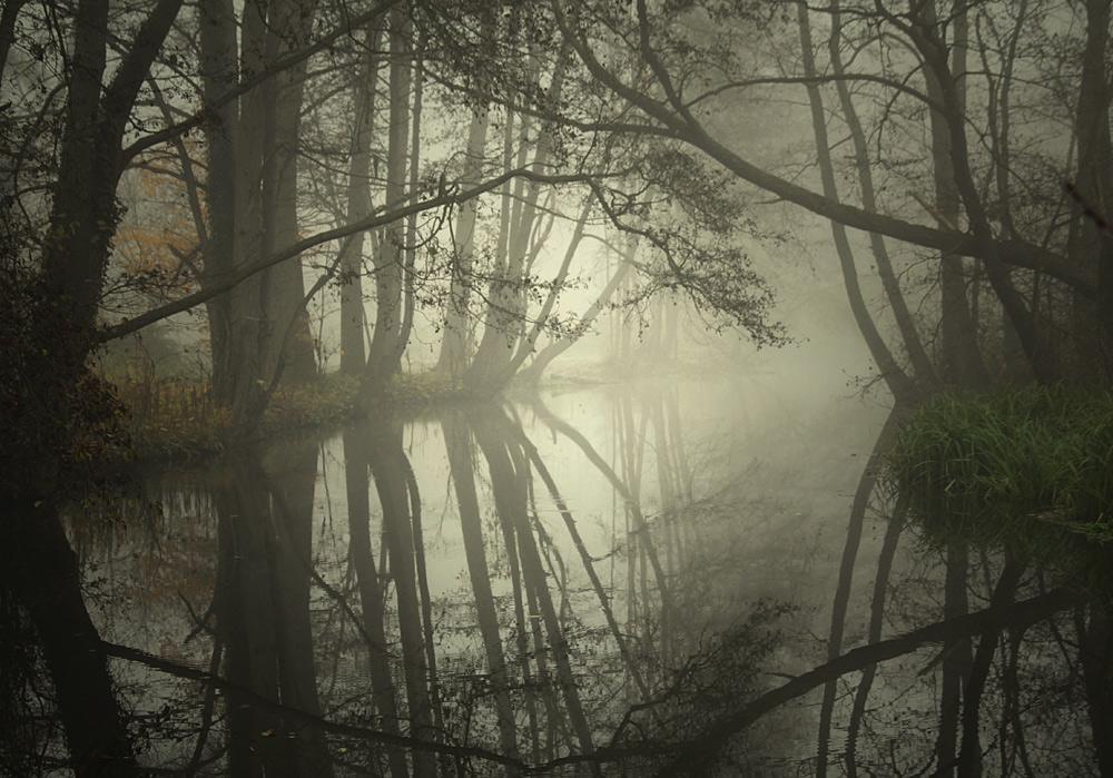 Forest, fog and flood   forest, fog, flood, dawn