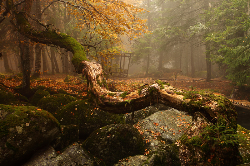 Magic forest | branches, trees, mist, green, forest