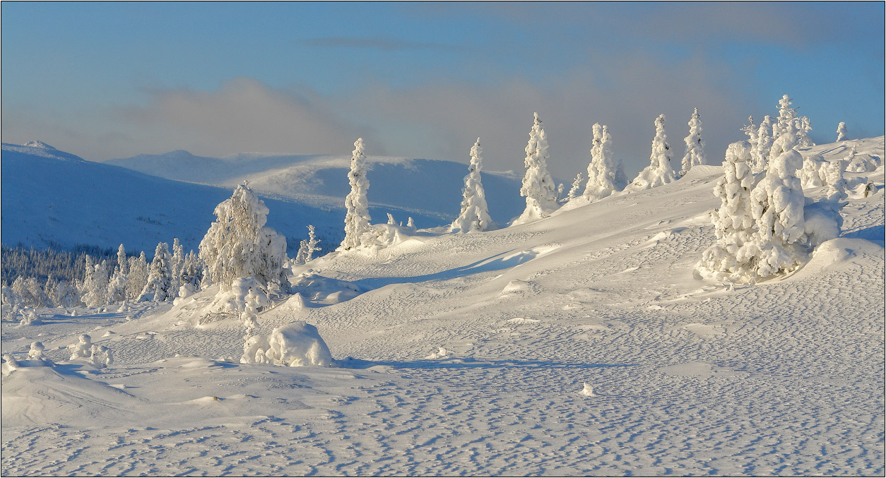 Winter spruces in snow | snow, spruce, snow, frost