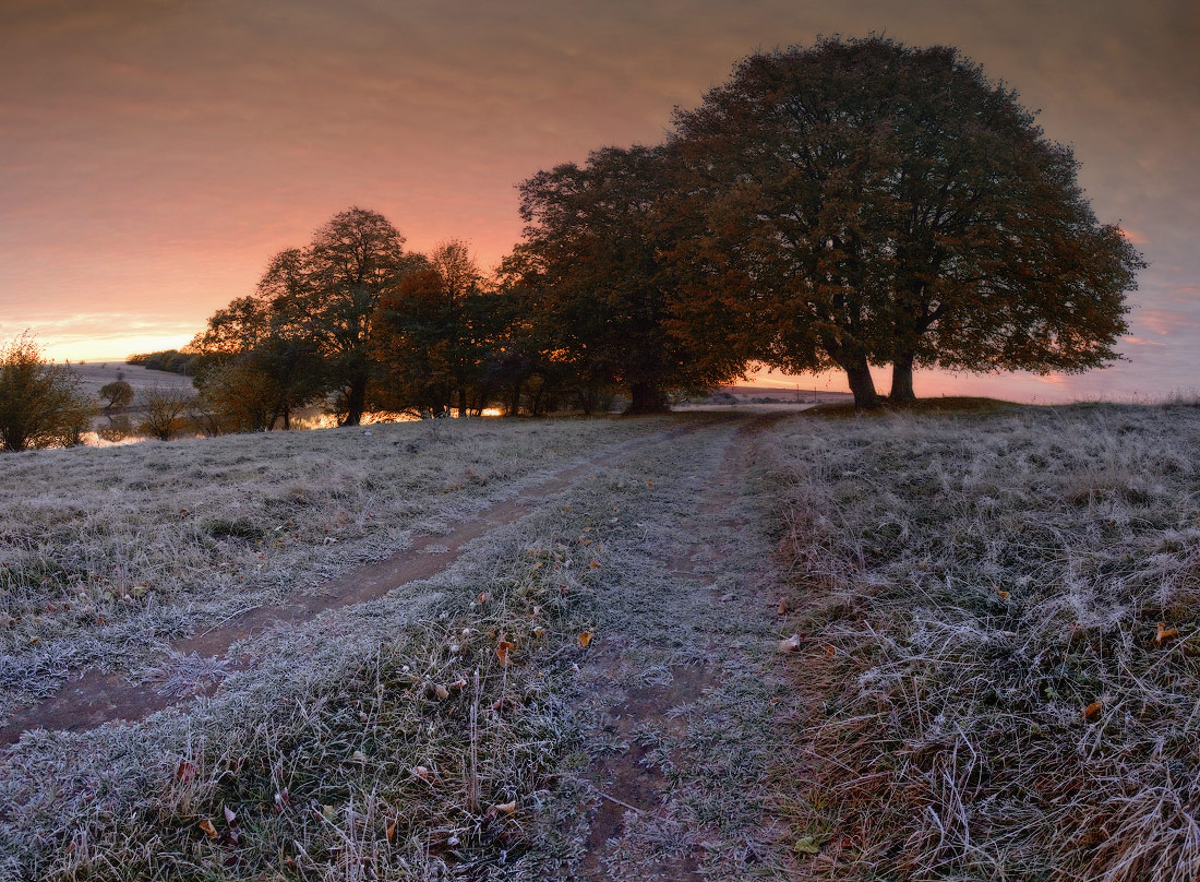 The first frost | frost, road, frosen grass, tree
