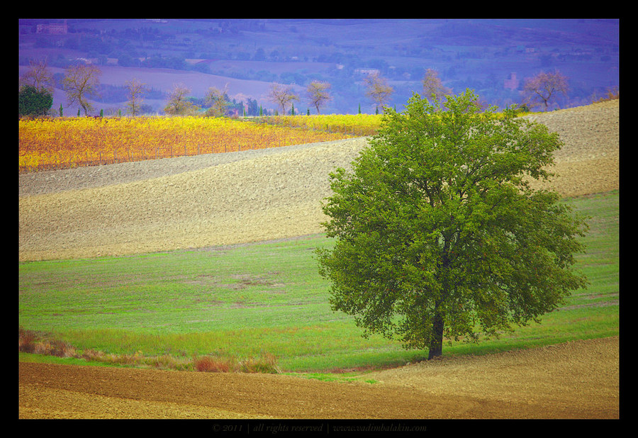 tags tree landscape - photo #48