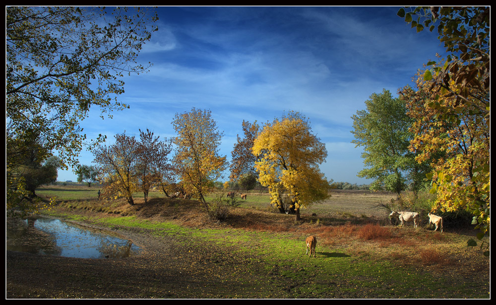River in the forest | river, forest, tree, autumn