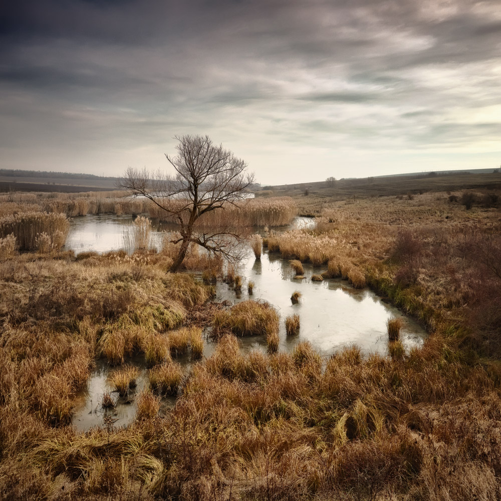 Dull day and bog | landscape, nature, sky, clouds, dry grass, tree, water, field, bog, dull day