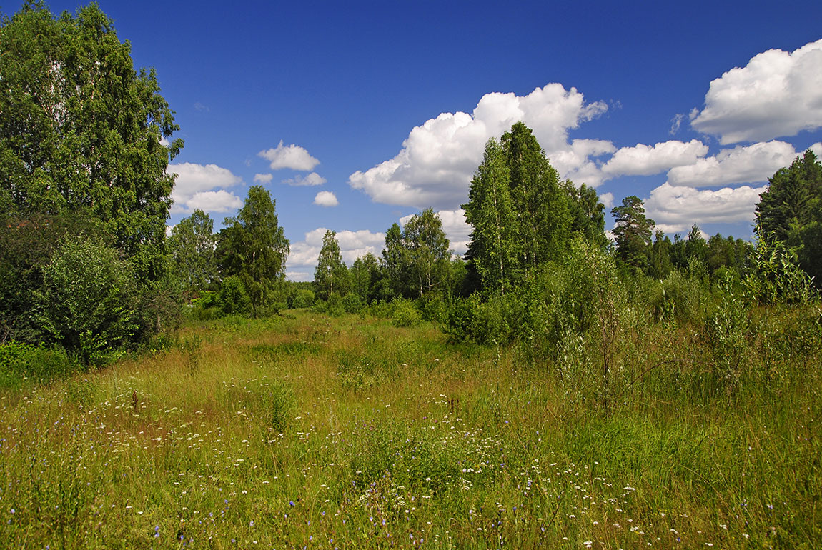 Sunny meadow | landscape , summer , clouds, sky  , sunny , birch, grass , trees , meadow, flowers