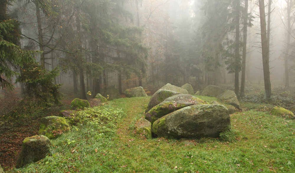 Stones in the pine wood | pine wood, stones, moss, mist