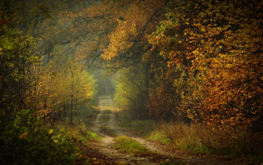 Tonnel in the wood | tonnel, road, tree, autumn