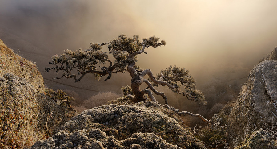 Mountain survivor | mountains, tree, mist, sunset