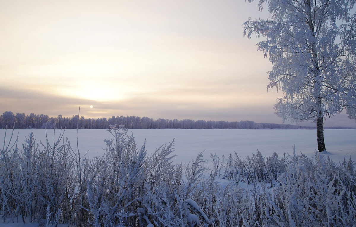 Field covered with snow | field, snow, birch, horizon