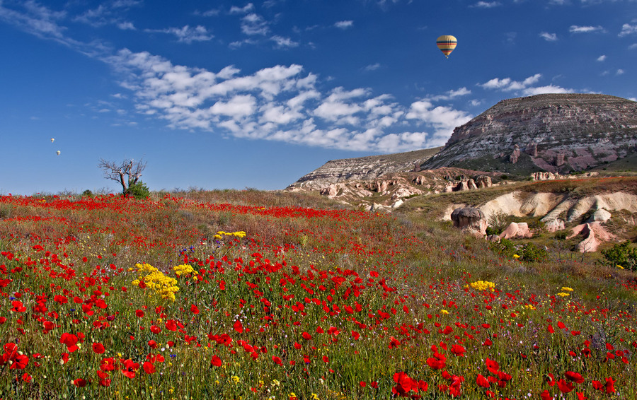 Air-baloon  | air-baloon, cliff, poppy field, flowers