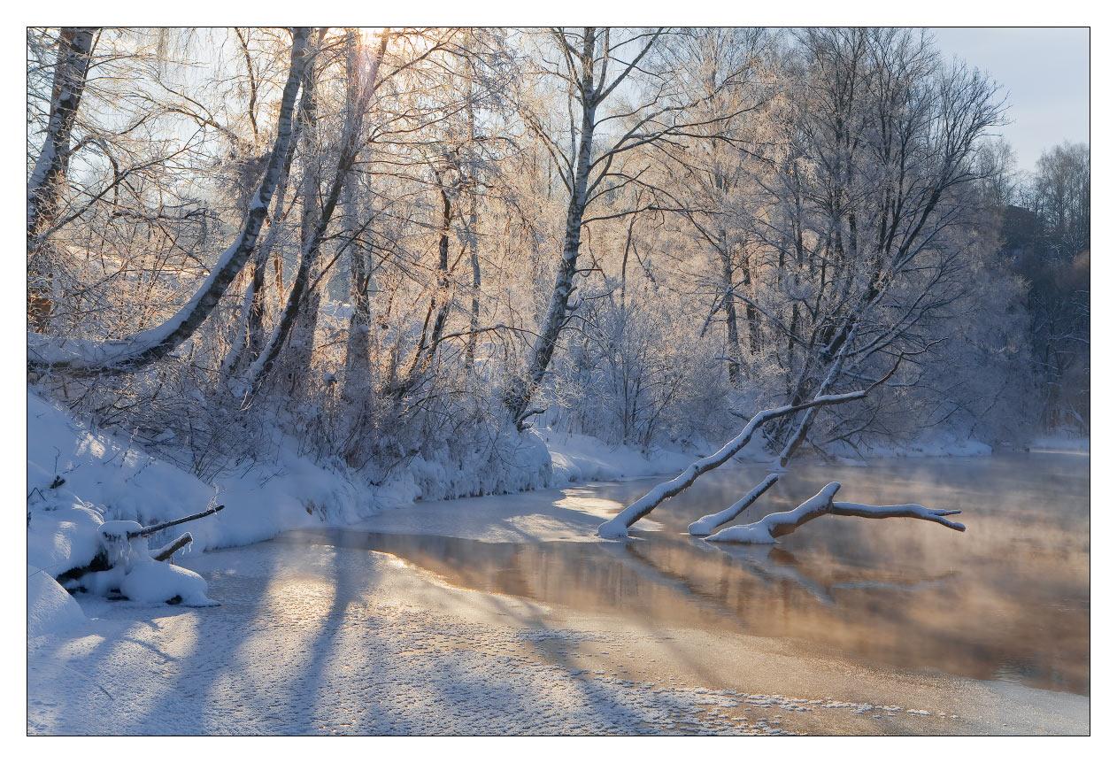 Flooded wood   flood, wood, high water, snow