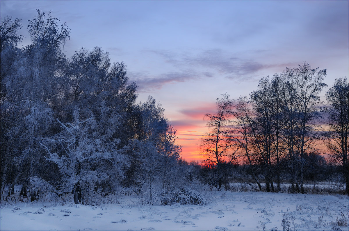Winter caption | winter, forest, snow, sky