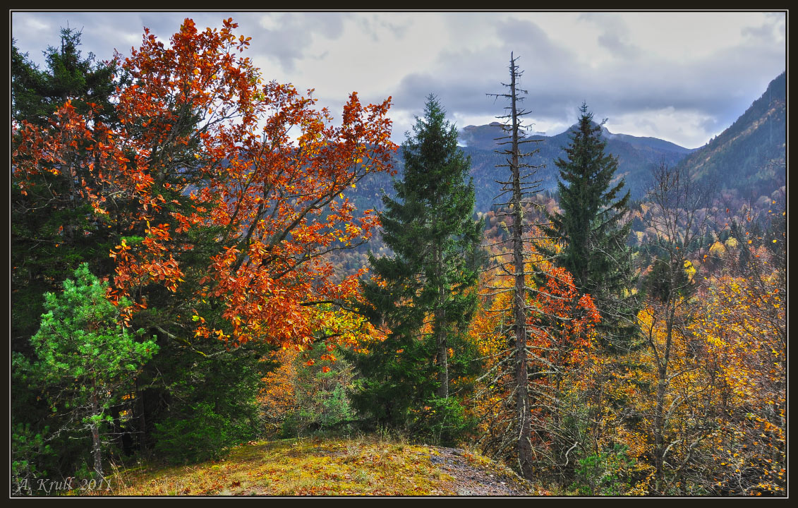 Colorful autumn | autumn, birth, spruce, fallen leafs