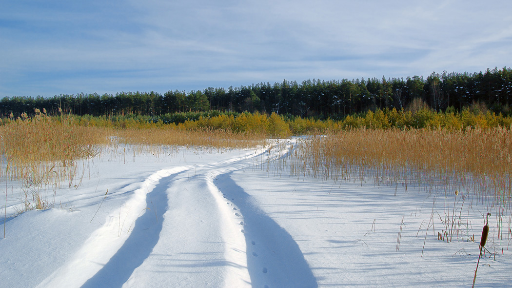 Going through the snow | snowy road, grass, field, pine wood