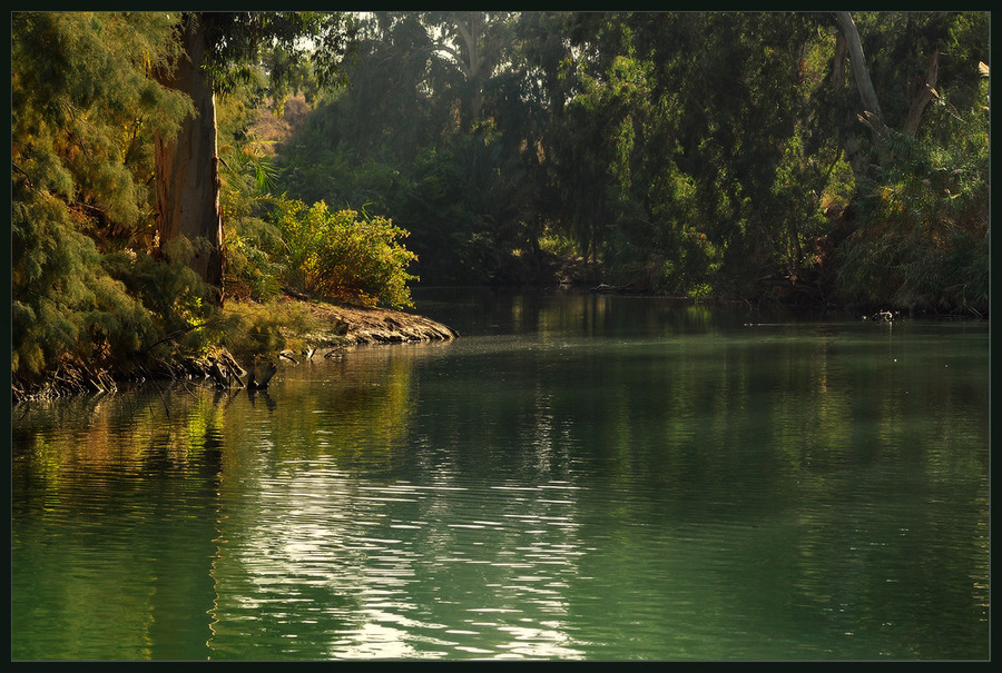 Fishing in soring   lake, forest, spring, tree