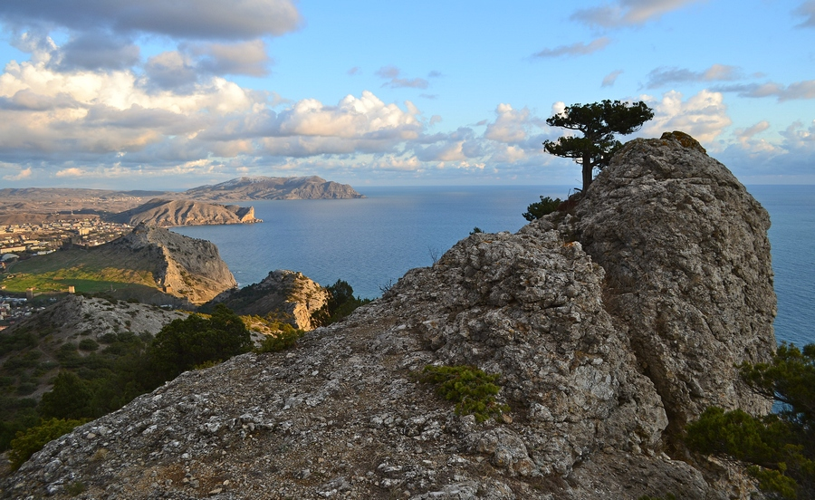 Cliff and the tree | cliff, tree, sea, bay