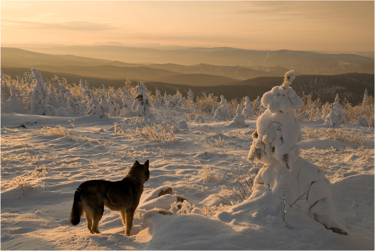 Dog looking at the frosen tree | frost, dog, hill, winter